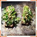 Тартинки с авокадо и спаржей